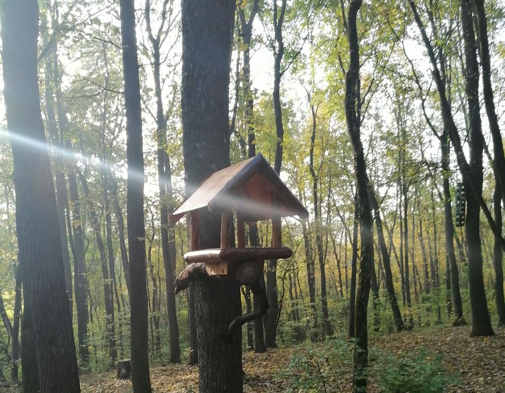 Кормушка в лесу