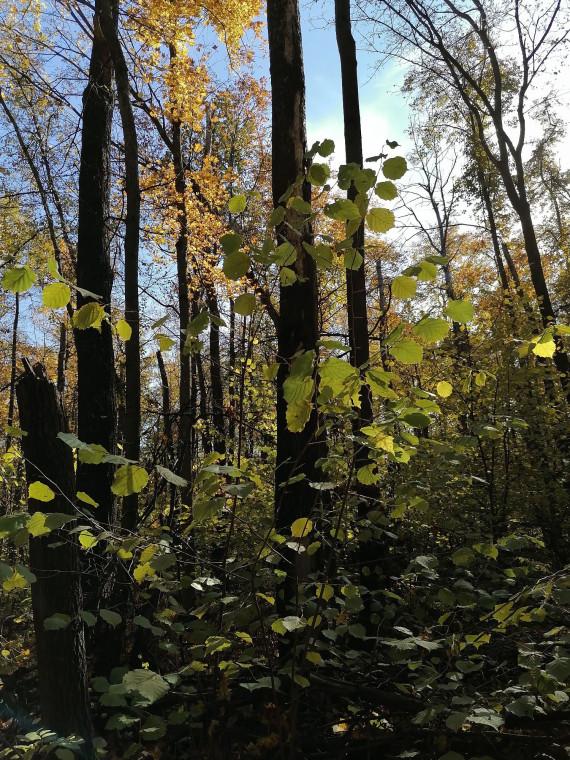 Лес, подсвеченный солнцем. Запах осенней листвы.