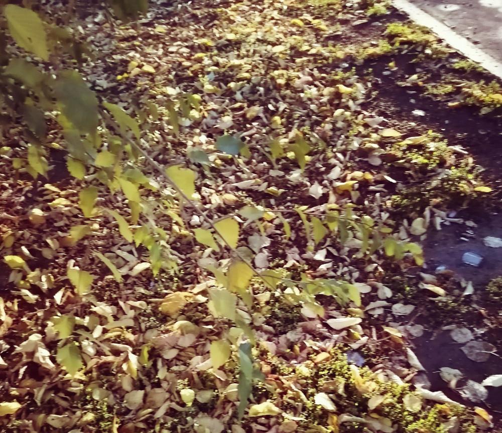 Листья жёлтые нам под ноги и ложатся...