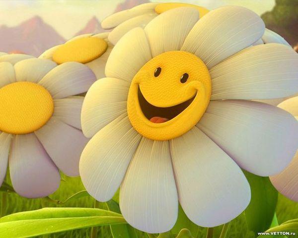 улыбка ромашки