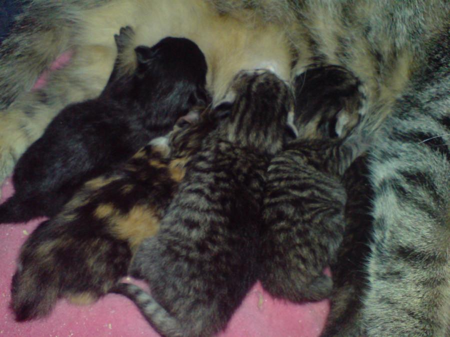 Котятки 21.08.2009