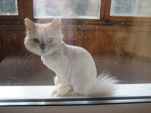 Кот и кошка  все о кошках и их хозяевах