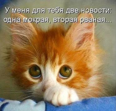 Смешные котики из интернета): elena_roza — LiveJournal