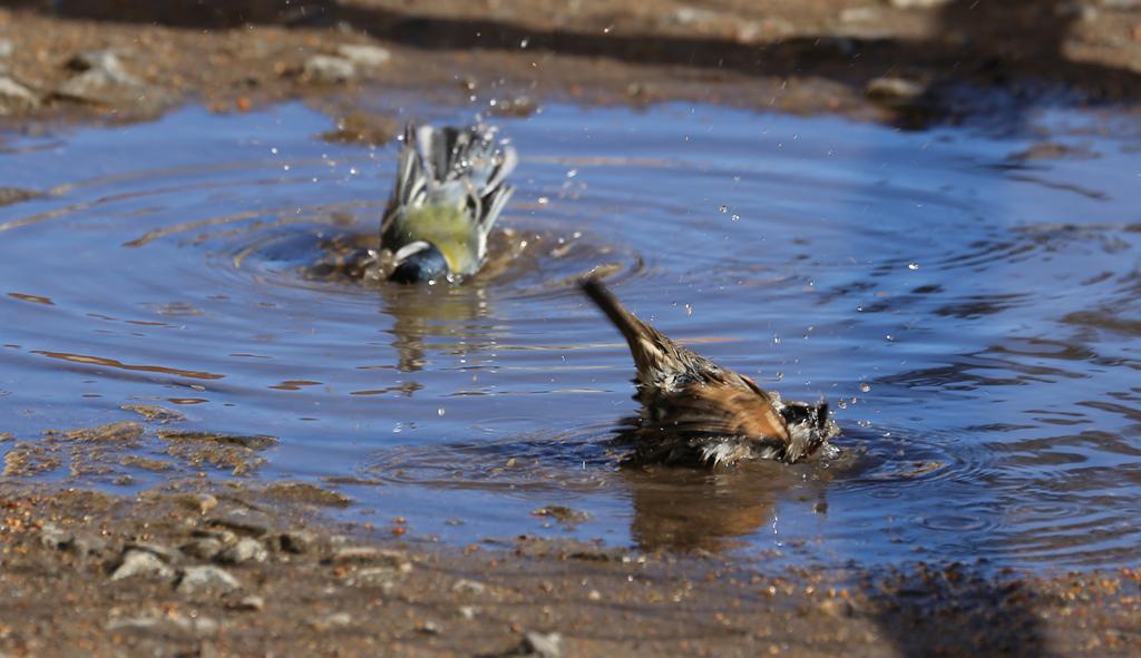 puddle11