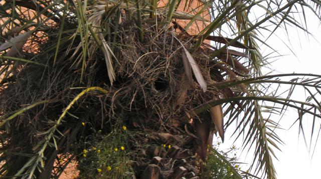 bird_home 2