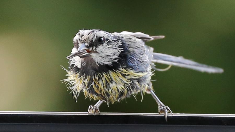 ptic1