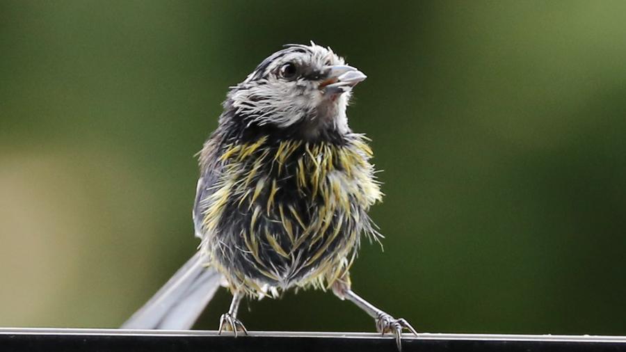 ptic2
