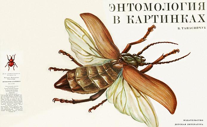 год, энтомология в картинках рассказ нашей