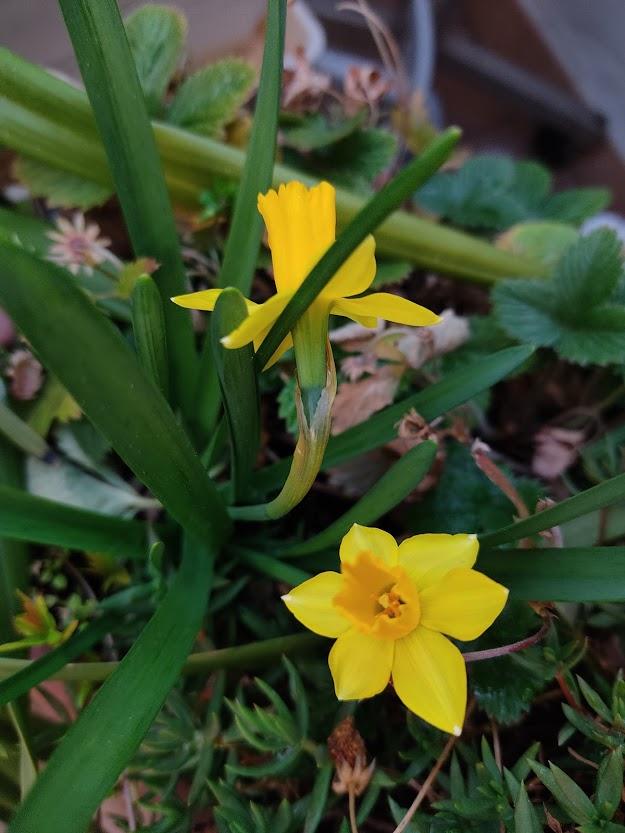 Эти мелкие из двухгодичного горшка с первоцветами)