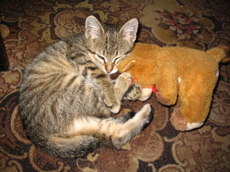 спят усталые игрушки....jpg
