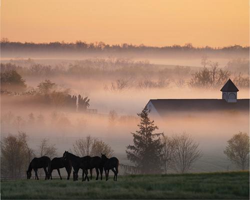 сайт знакомст для любителей лошадей