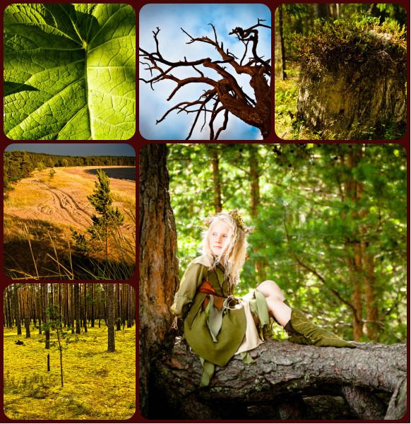 Pinefairy-collage.jpg