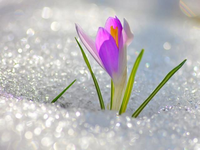 1 марта - День предвкушения тепла