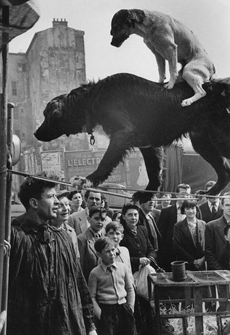 Marc Riboud - Dog Acrobats, Paris, 1953