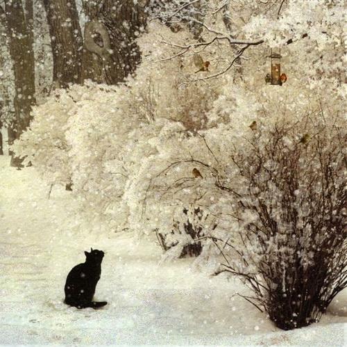 Jane Crowther - Birdwatching Cat
