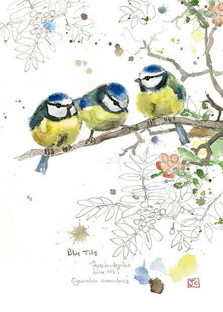 Jane Crowther - Blue Tits
