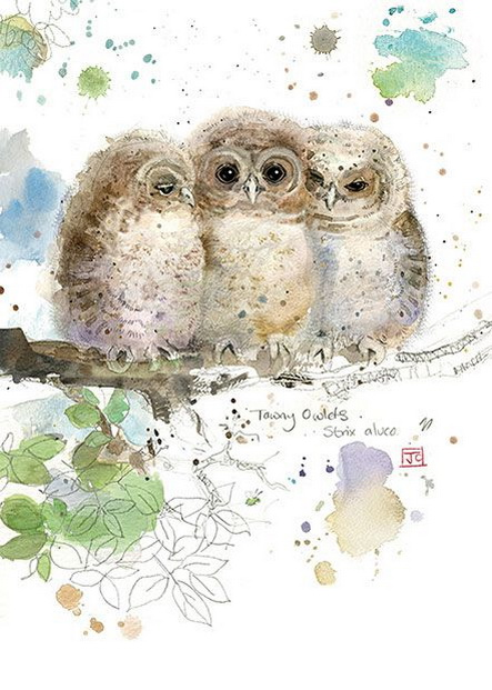 Jane Crowther - Three Owlets