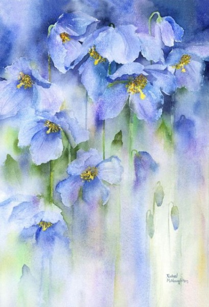 Rachel McNaughton - Himalayan Poppies