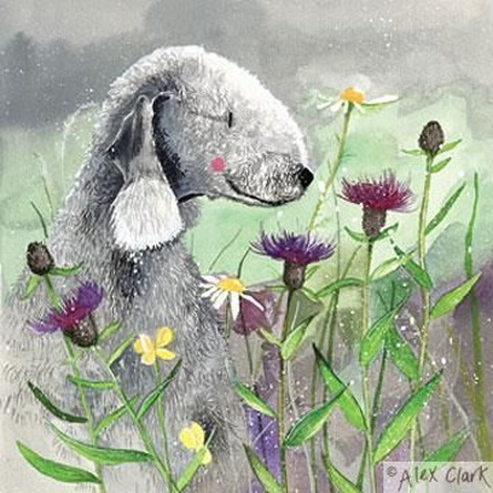 Alex Clark - Bedlington and Knapweed