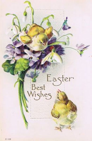 Chicks and violets ~ Easter Best Wishes