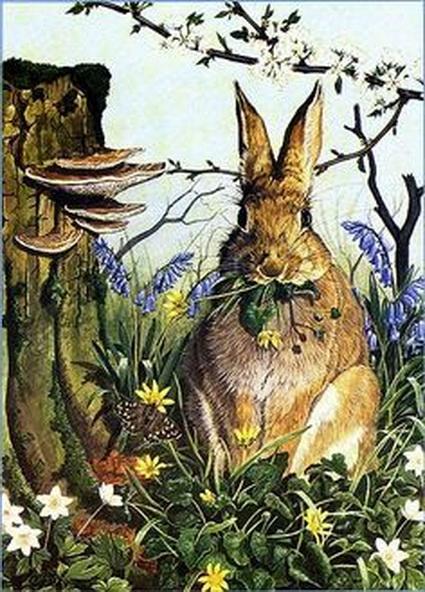 Edith Holden - brown bunny