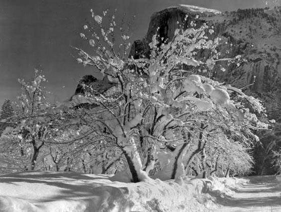 Ansel Adams Half Dome, Apple Orchard