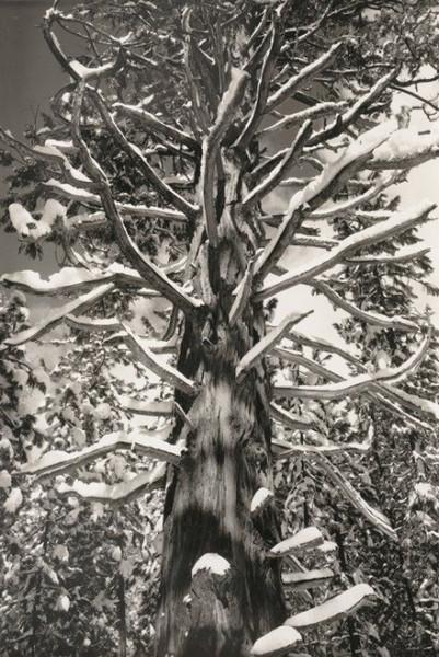 Ansel Adams Winter