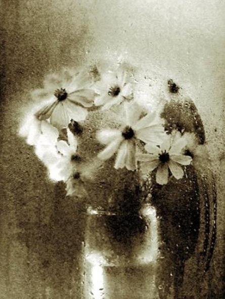 Josef Sudek simple bouquet