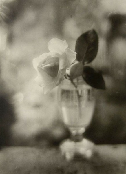 Josef Sudek Rose in a Glass
