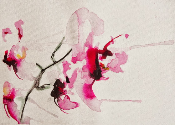 Karin Johannesson - Orchids