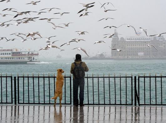 чел и собака  смотрят с моста
