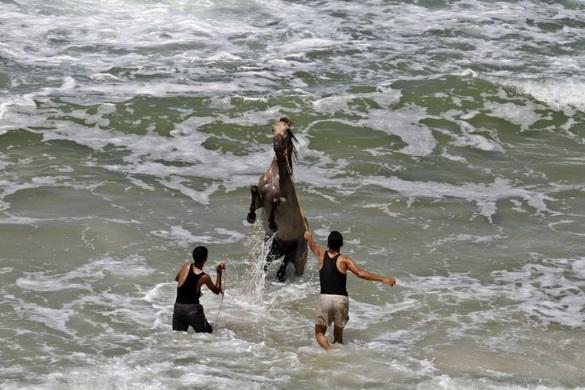 конь в океане