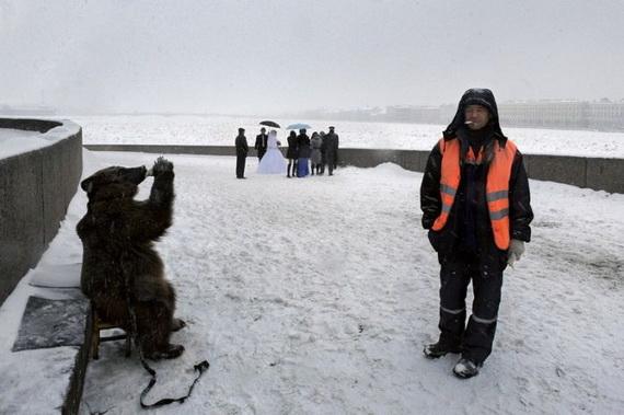 медведь алкаш