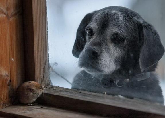 пес и мышка