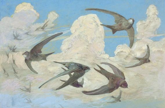 leo paul robert - swift bird