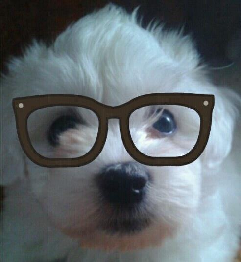 yuki glasses