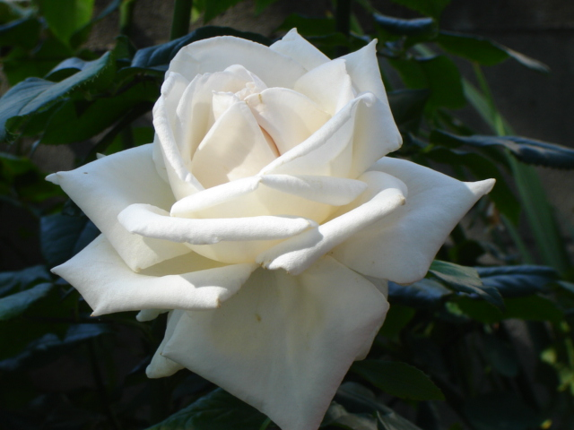 For Naomi Rose, Anna Mae, Marian, Mary Liz and Lena