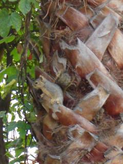 one of 3 female squirrels
