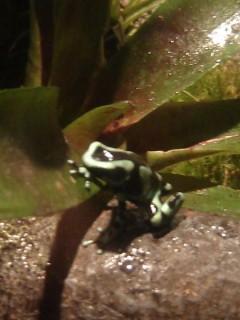 fun but dangerous froggie