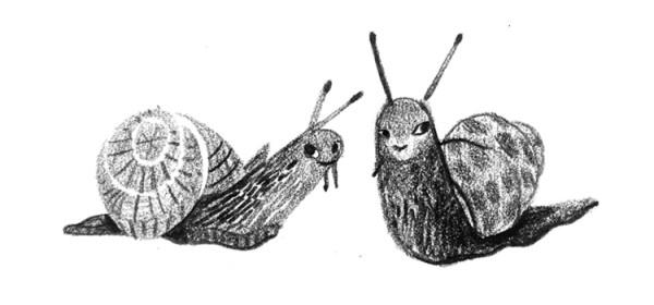 Snailsws
