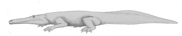 800px-Prionosuchus.jpg