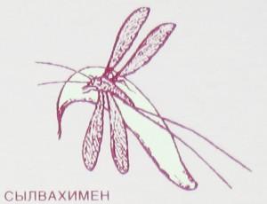 Kozyavochka.jpg
