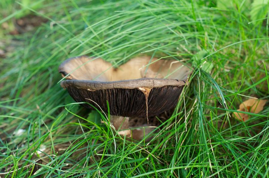 mushroom 090
