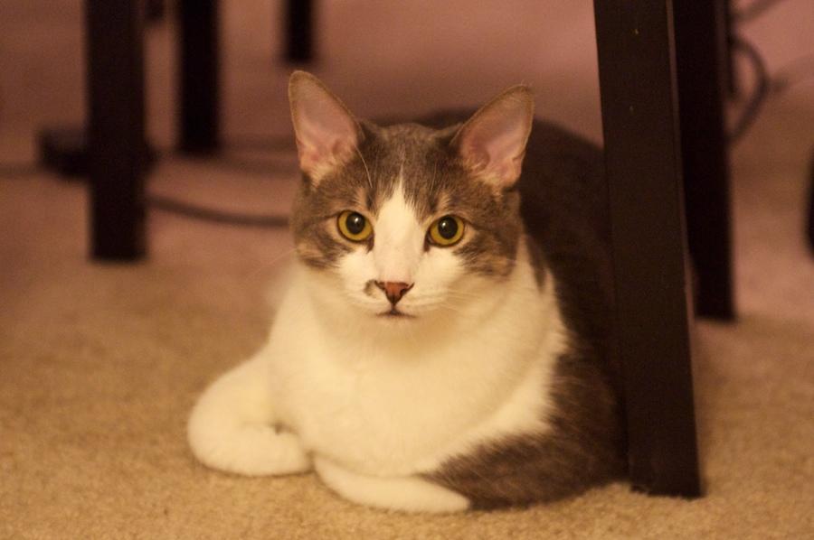 cat 121