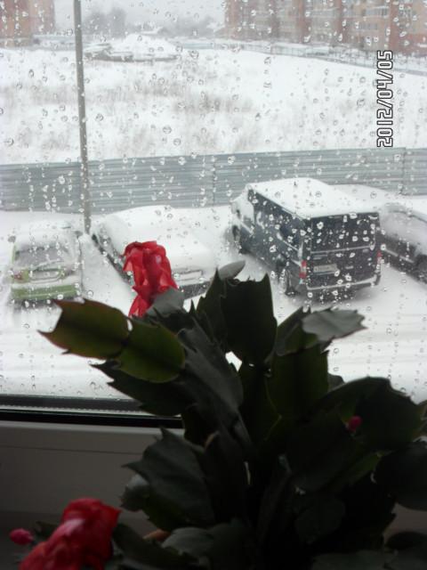 Декабрист и снег в апреле