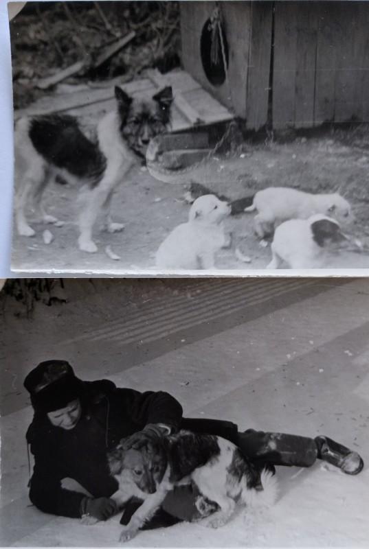 1970_двор_Мушка.jpg
