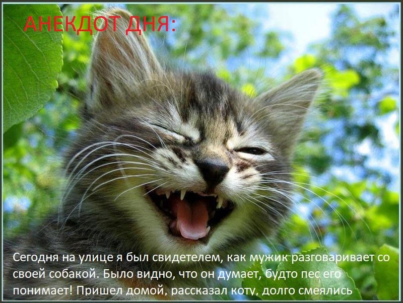 кот_ржот_1