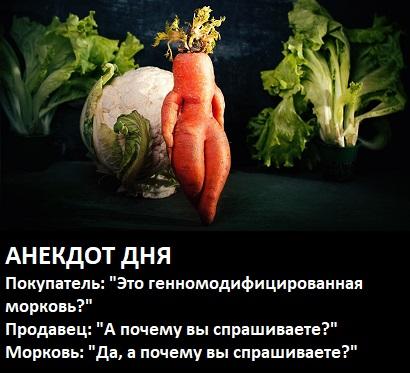 морковь_гмо_1
