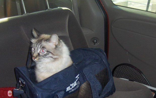 bosya travelling in the car