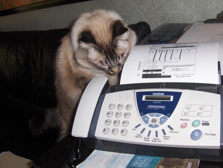 bosya takibg fax